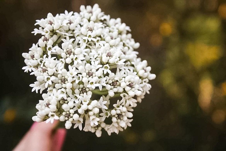 Patonga wildflowers