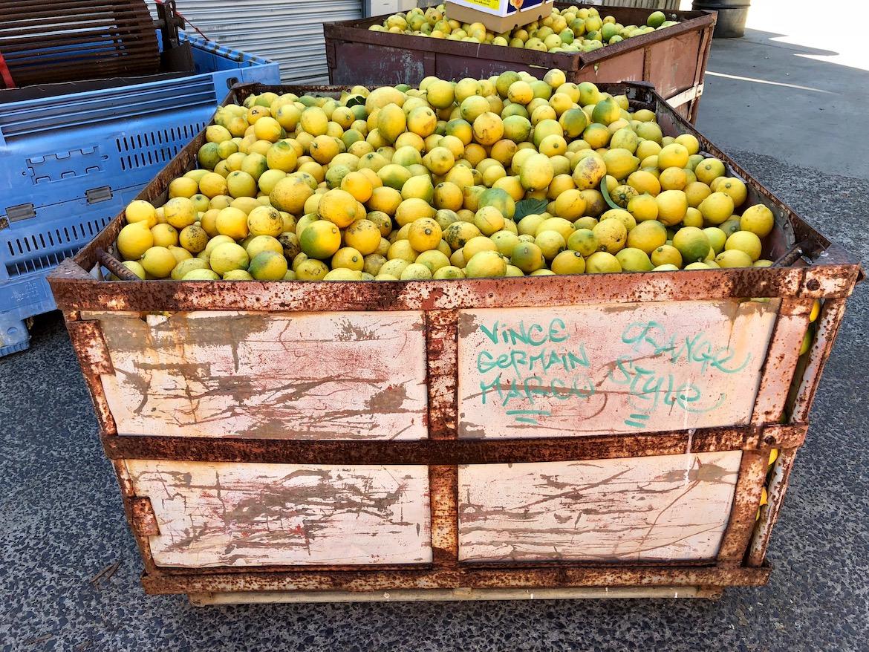 Eastcoast oranges. Photo: Maire Patane